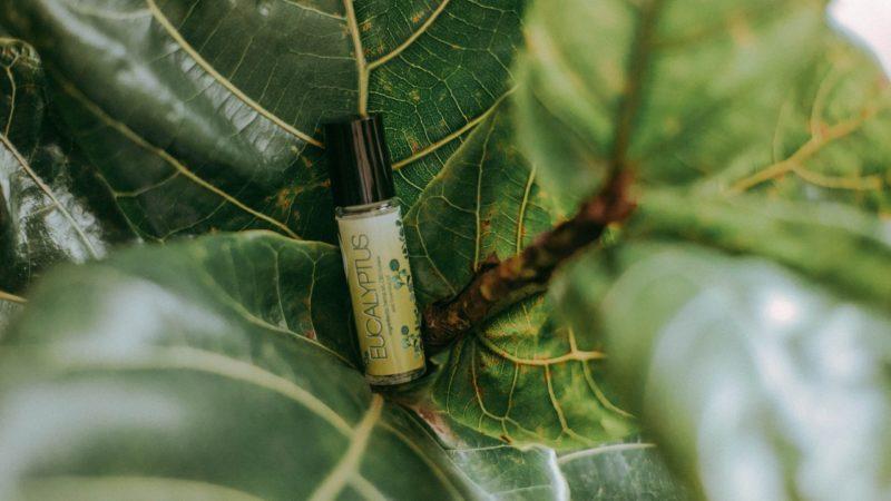 L'huile d'eucalyptus : pourquoi et pour qui ?